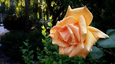 flower-2375736_1920