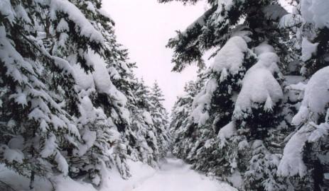 snowy-road1392514